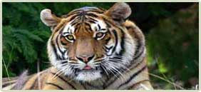 Corbett Wildlife Tour Packages