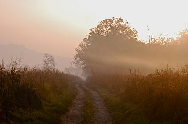 Morning Safari at Corbett