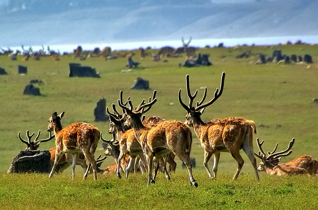 Spotted Deers in Corbett National Park