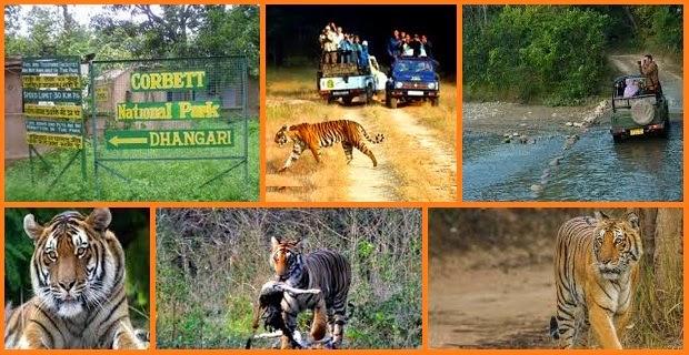 Jim Corbett National Park1 (1)