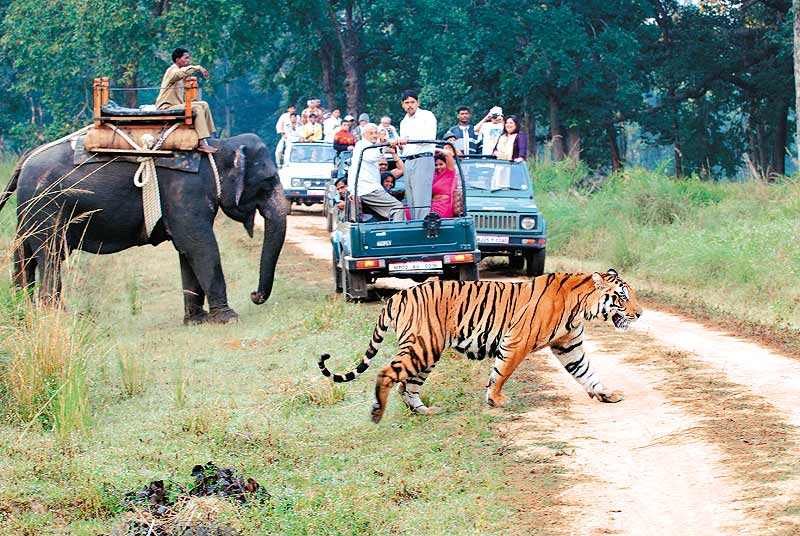 india-wildlife-tourism