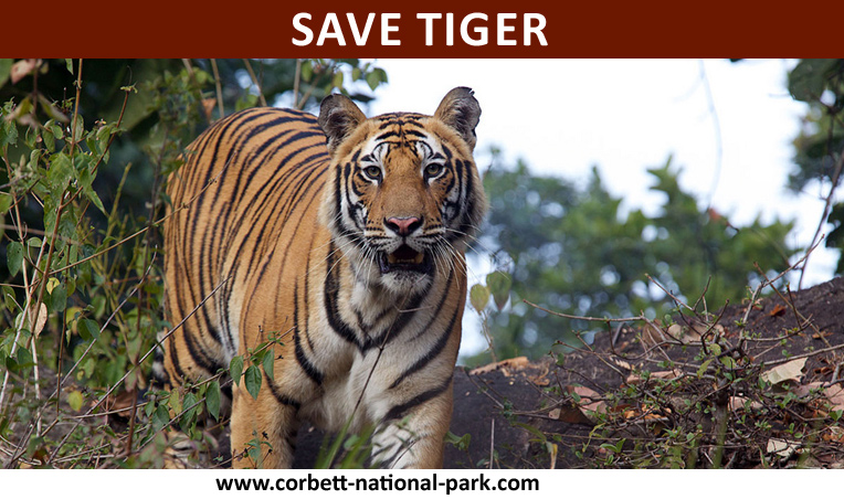 Save-The-Tigers.
