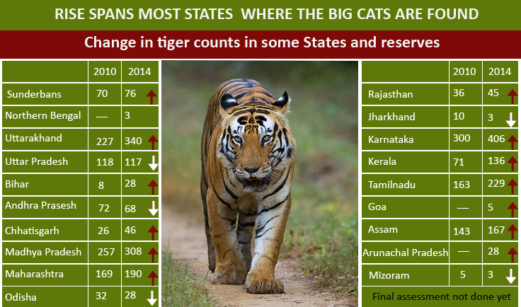 Tiger Census Data Report